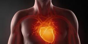 Американским ученым удалось вырастить сердечную ткань
