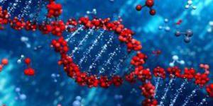Обнаружен ген, снижающий риск развития сердечного приступа