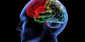 Учёные: Нервные клетки восстанавливаются