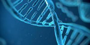 Вирусные «окаменелости» в нашей ДНК помогают бороться с инфекциями