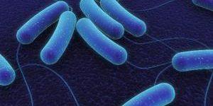 Бактерии: мир внутри нас