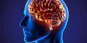 Получить знания: потребность мозга человека, эффективные способы развития, особенности обучения и польза