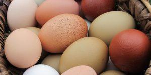Яйцо: гликемический индекс, витамины, калорийность