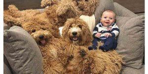 Аккаунт 6-месячного мальчика и семьи собак собрал уже 700 000 подписчиков: фото